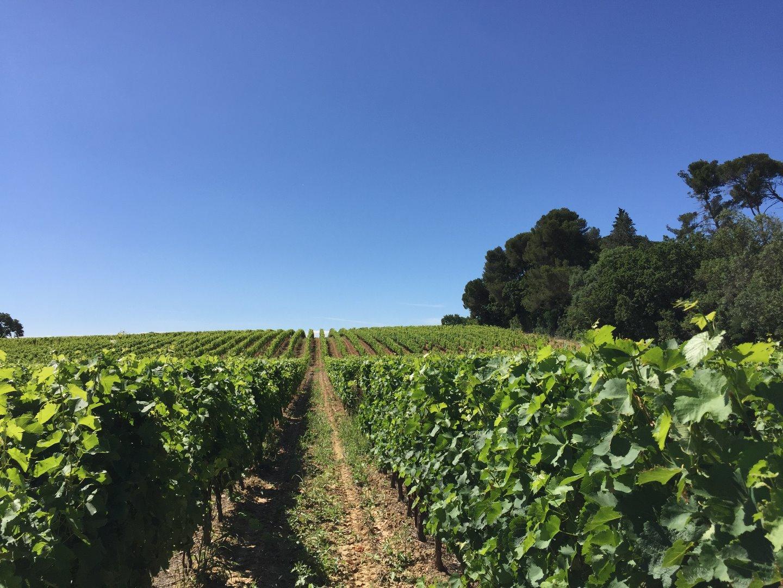 Een van de topwijngaarden: Le Parc