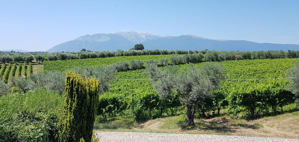 Il Feuduccio - Abruzzo