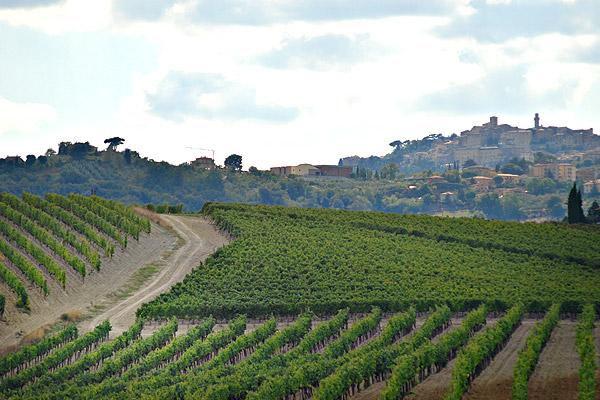 De wijngaarden van Il Conventino in Toscane