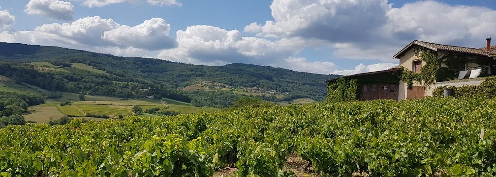 Domaine Bergeron: Beaujolais Villages, Morgon & Saint-Amour
