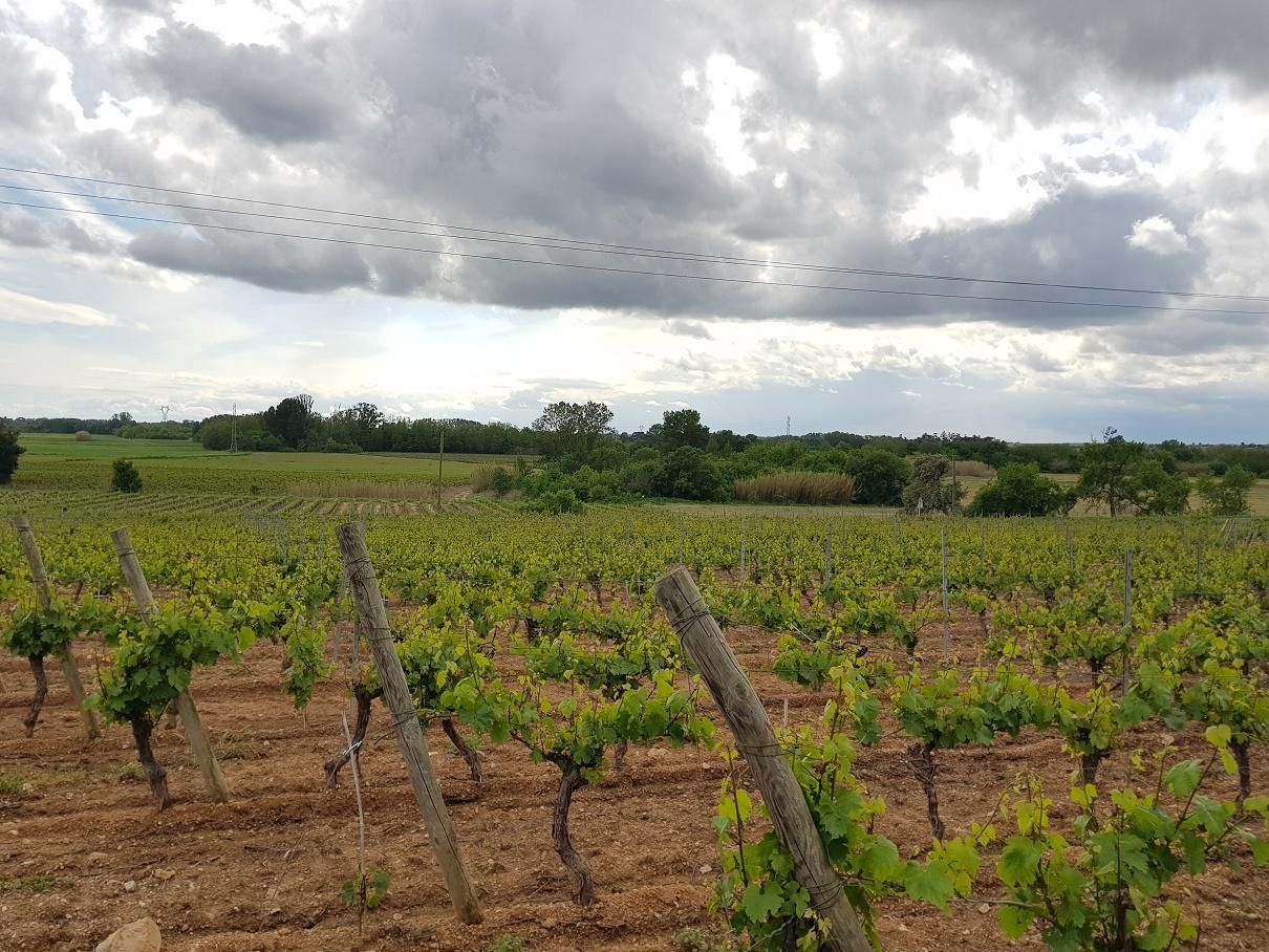 Bensdorp wijnen