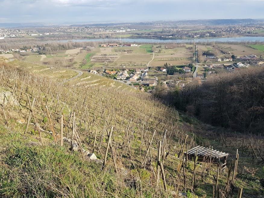 Domaine Richard Viognier - Saint Joseph - Condrieu